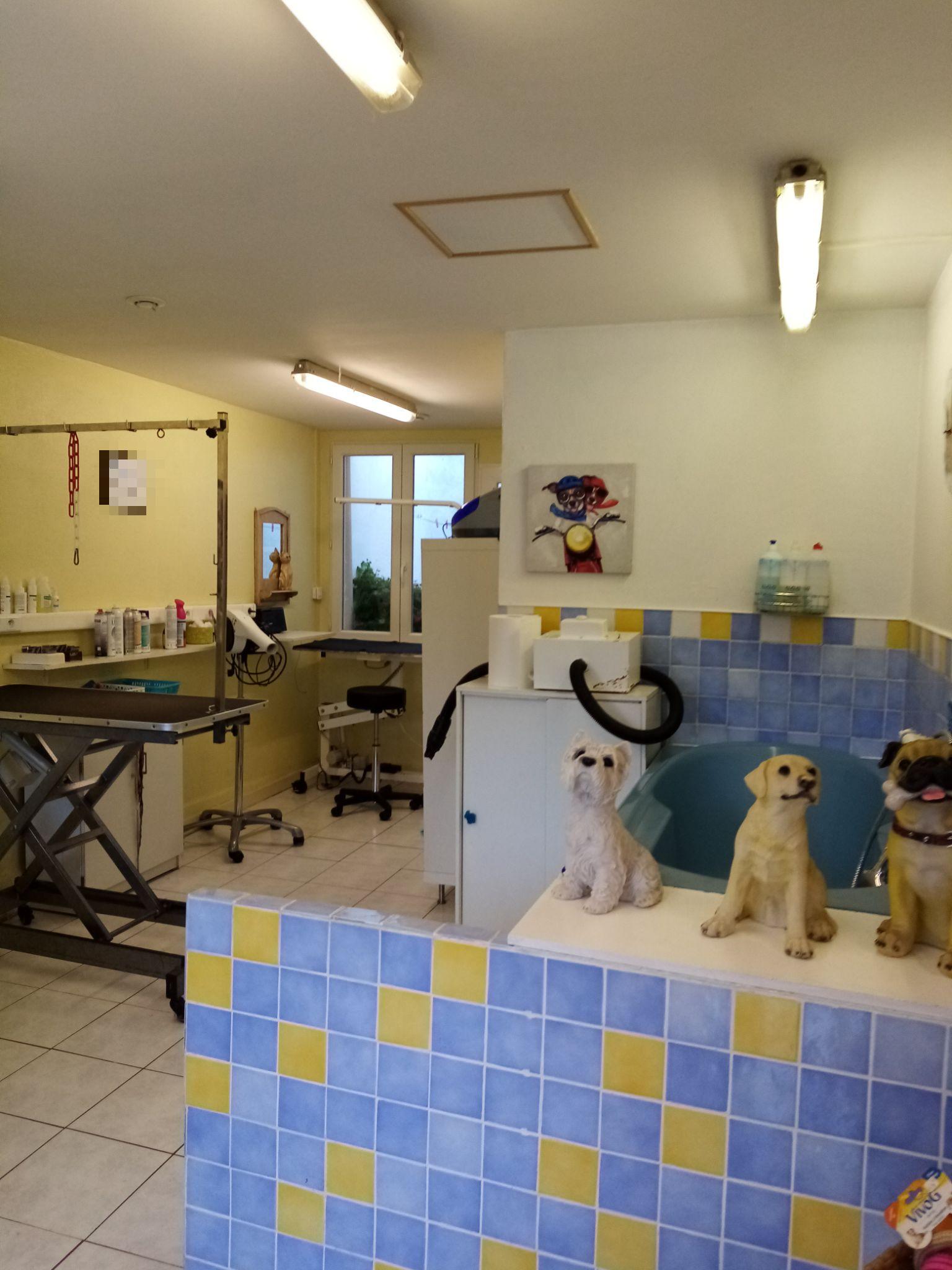 Vente Salon de toilettage canin et félins à Wimereux station balnéaire, bord de mer (62930)