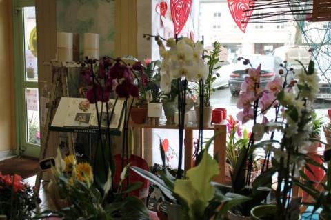Vente Fleuriste, 58 m2 à Guingamp (22200)